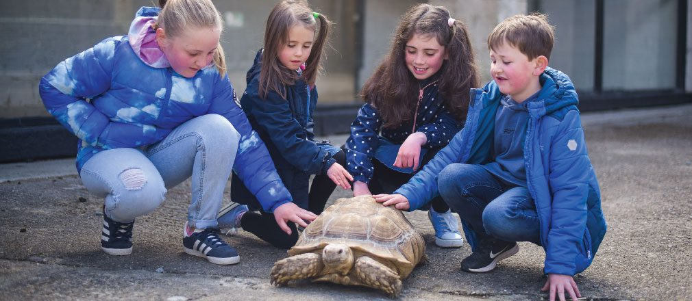 Four kids rubbing a turtles shell