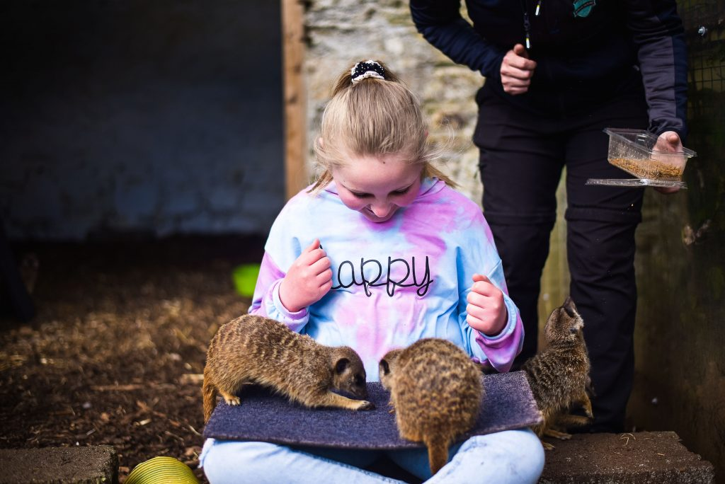 Little girl sitting down with baby meerkats on her lap