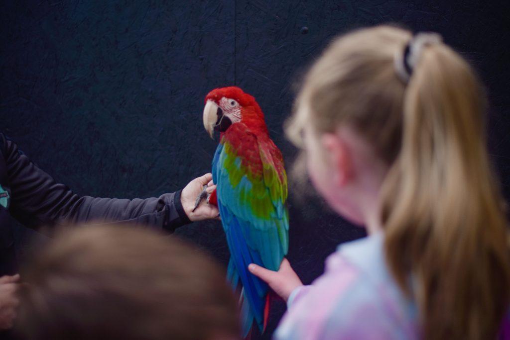 Little girl touch a parrot