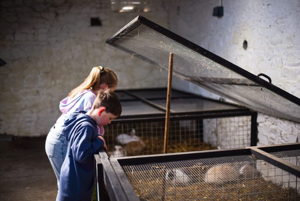 Boy and girl looking down into a cage with guinea pigs in it