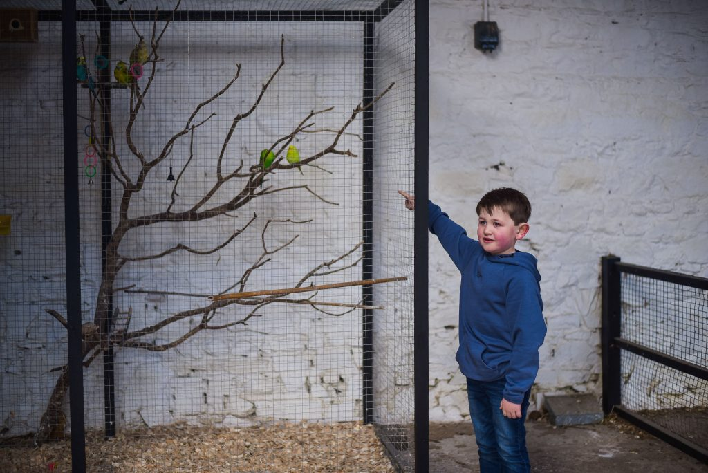 Little boy pointing to a cage with birds in it