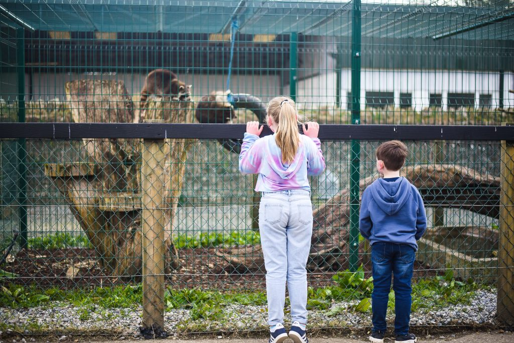 Little girl and boy standing at the fence looking at the animals