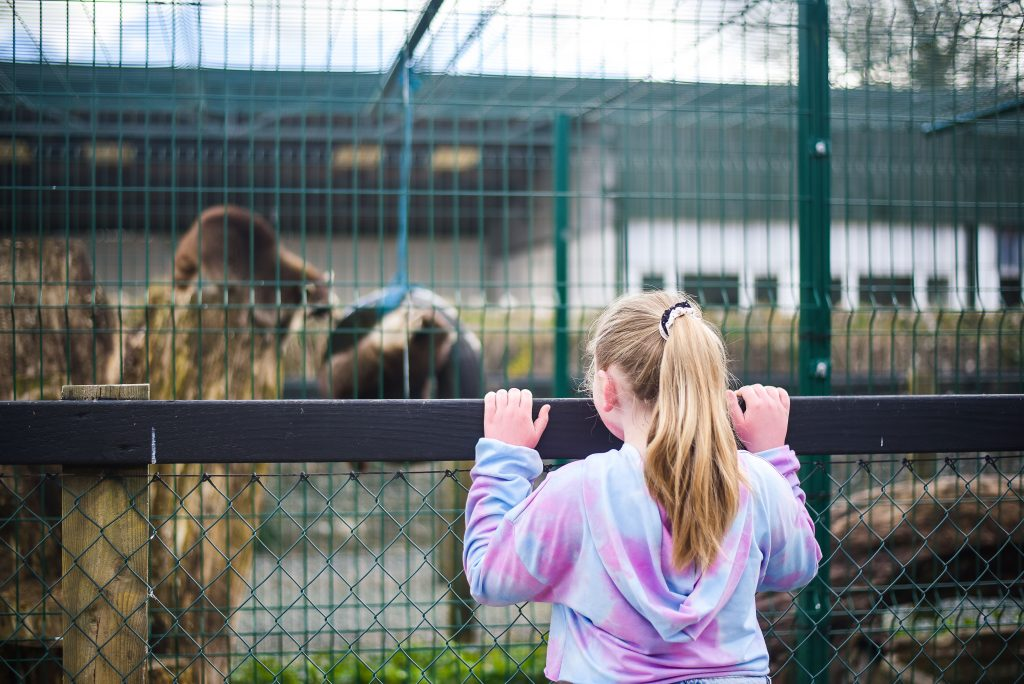 Little girl standing at the fence looking at the animals
