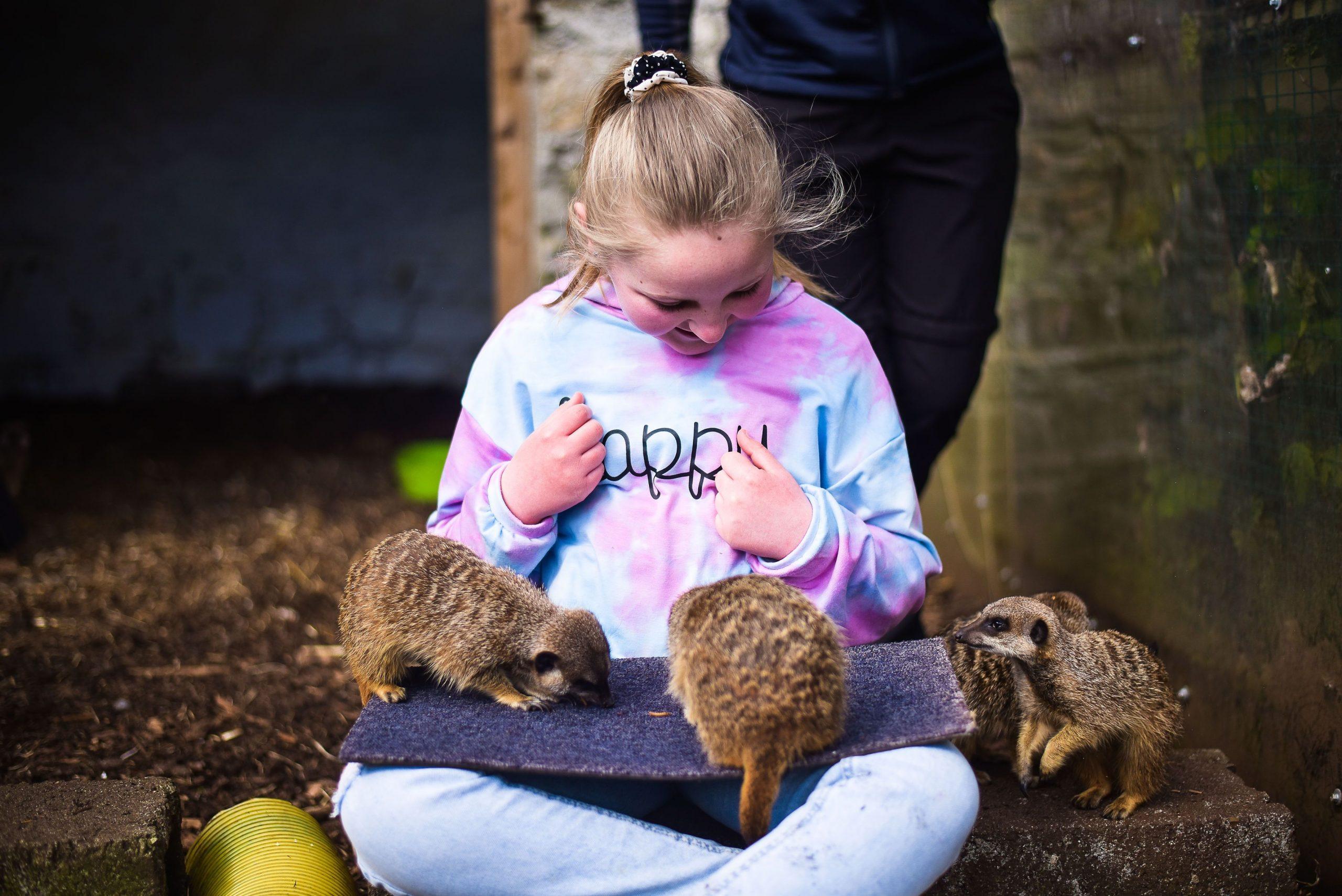 meerkat-experience-wells-house-and-gardens-gorey